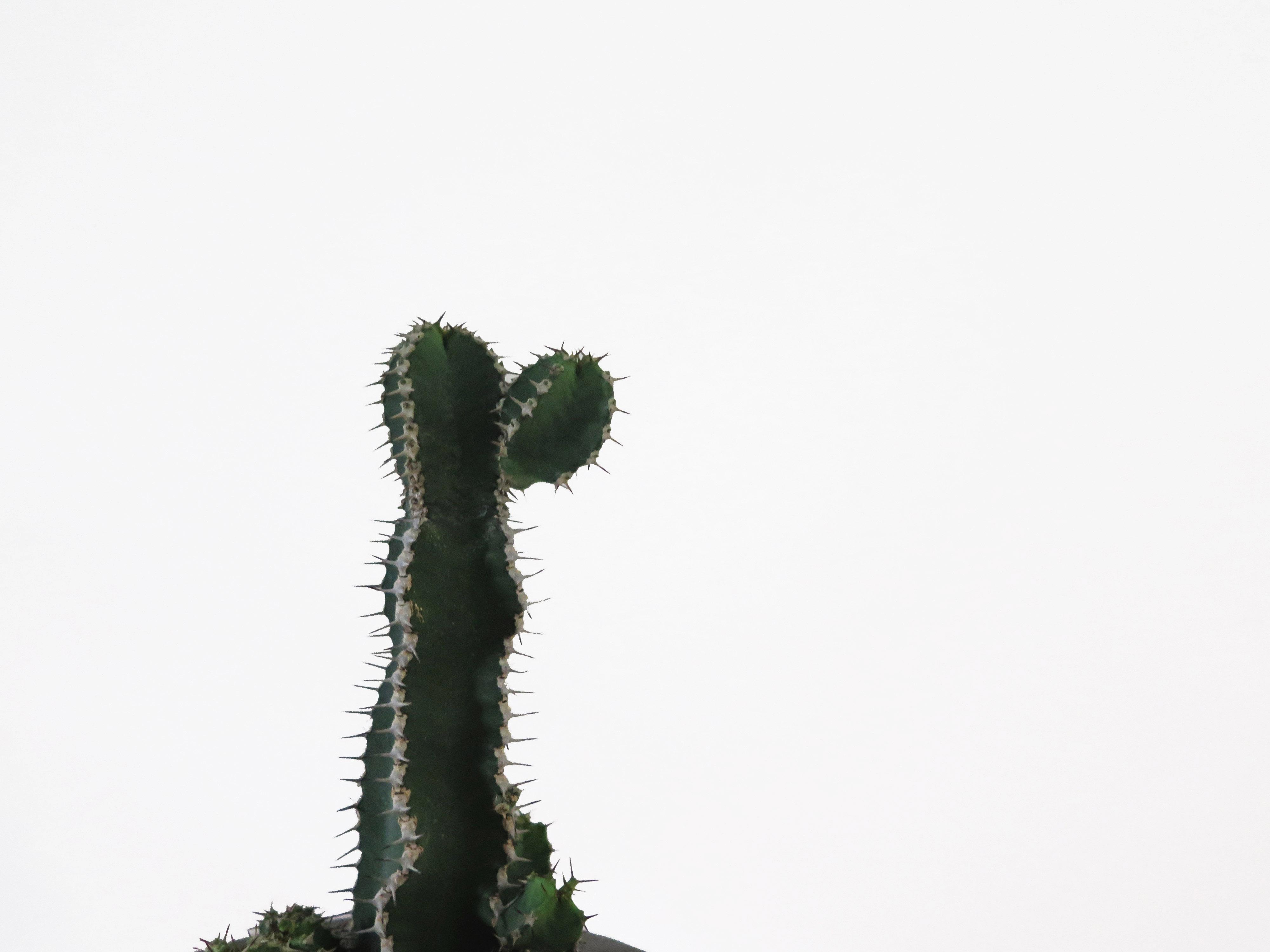 cactus-1_detail