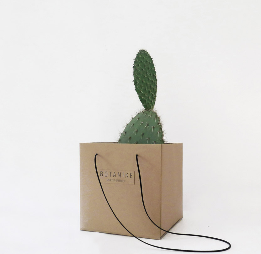opuntia-gift-square