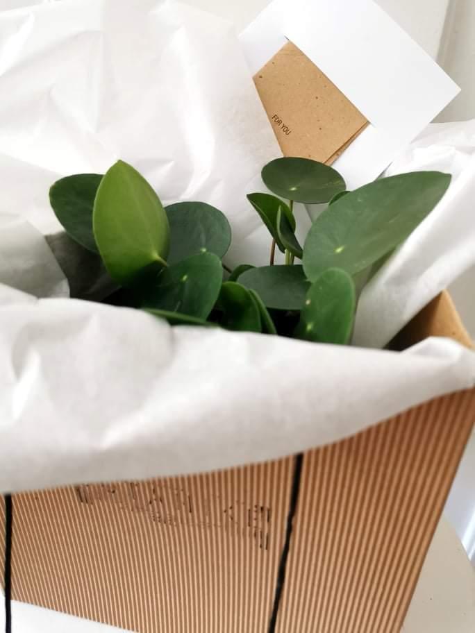 poklon botanike 5 _ photo by BOTANIKE