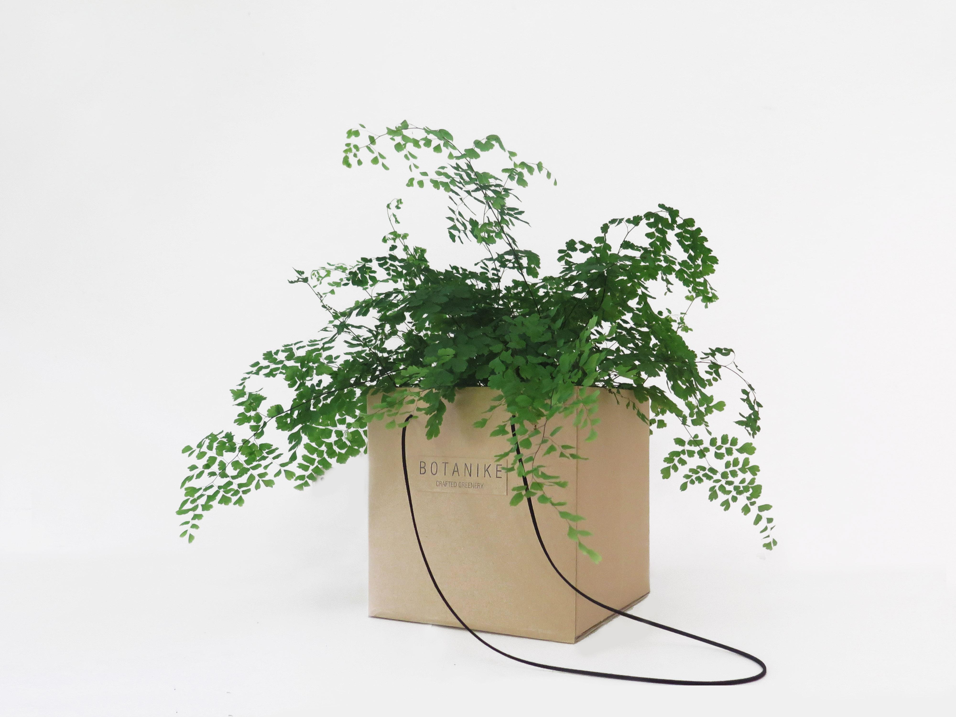 botanike gift_adiantum
